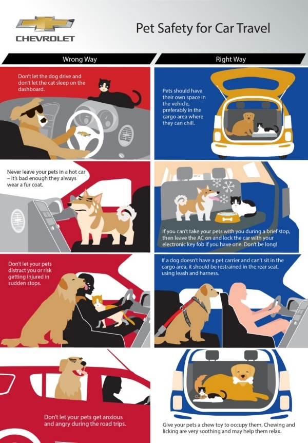 Chevrolet Recommends Tips for Traveling with a Pet